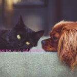 犬派/猫派は英語で何? – person の意味と使い方をネイティブが解説するよ!